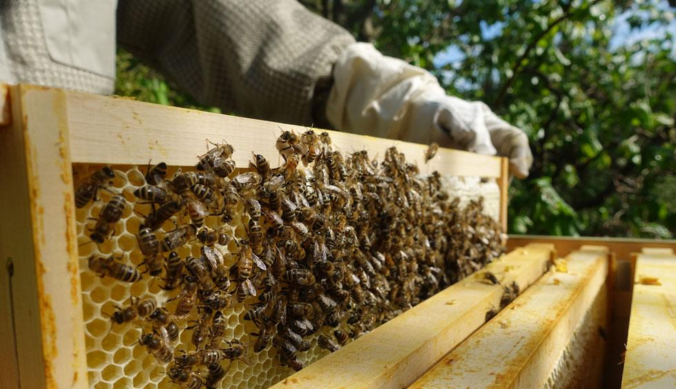 Honig & Imkerei in den Stauden - regional, ehrlich und schmackhaft