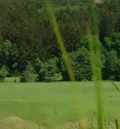 Stauden Honig aus dem Naturpark Augsburg
