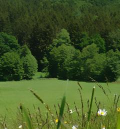 Stauden Honig aus dem südlichen Teil des Naturparks