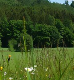 Honig aus den Stauden - wundervolle Landschaft, ideal für Honigbienen