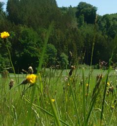 Staudenhonig - holen Sie sich die Vielfalt des Naturparks auf den Esstisch