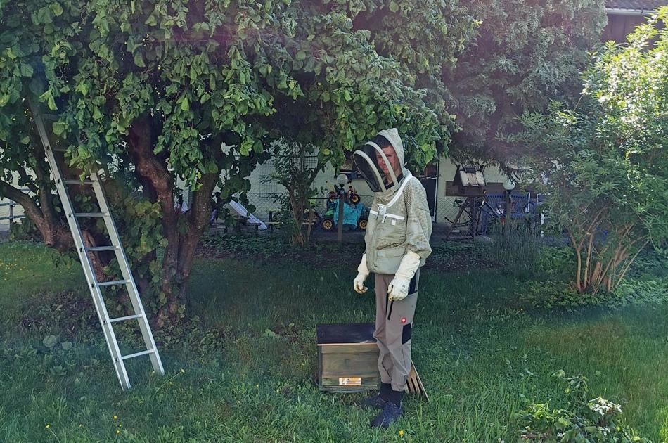 Bienenschwarm melden und der Imker Weiss fängt die Bienen ein