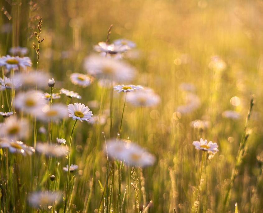 Frühjahrshonig aus der Blumenwiese im Frühling